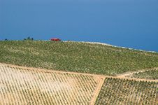 Free Red Truck Among Fields Of Grapes Stock Photo - 17758000