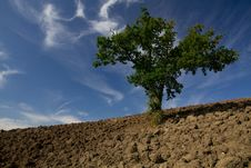 Free Single Tree Standing In A Plain Field Royalty Free Stock Images - 17758209