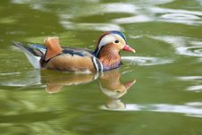 Free MAndarin Duck Drake Stock Photography - 17759922