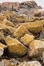 Free Granite Boulder On Pink Granite Coast In France Royalty Free Stock Photos - 17766318