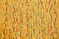 Free The Carpet Texture Royalty Free Stock Photography - 17768457