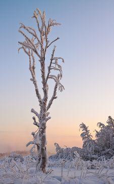Free Winter Landscape Stock Photo - 17760770