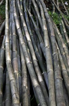 Free Bamboo S Royalty Free Stock Images - 17761009