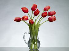 Free Red Tulips Royalty Free Stock Photos - 17761808