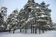 Free Winter Landscape Royalty Free Stock Photos - 17761898