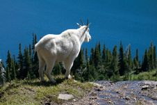 Free Mountain Goat On Cliff Royalty Free Stock Photography - 17762467