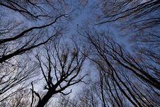 Free Twiligt Trees Stock Image - 17764281