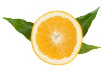 Free Orange Slice With Green Leaves Royalty Free Stock Photo - 17764955