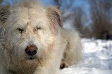 Free Dog Stock Images - 17765654