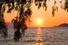 Free Pine Tree Branch And Sunset Royalty Free Stock Photos - 17766648