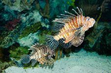 Free Exotic Fish. Stock Photo - 17767700