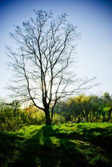 Free Picnic Under Tree Stock Photography - 17768092