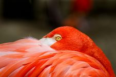 Free Pink Flamingo Stock Photo - 17768200