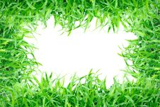 Free Grass Frame Isolated Stock Image - 17768951