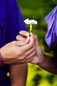 Free Couple S Hands Holding White Flower Stock Images - 17768974