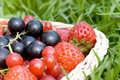 Free Ripe Berries In A Basket Stock Photography - 17770192