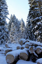 Free Snowy Forest Royalty Free Stock Photo - 17778375