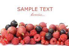 Free Garden Ripe Berries Isolated Stock Photos - 17770163