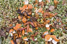 Free Orange Zest And Sprouts Leaves Royalty Free Stock Photography - 17771367
