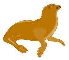 Free Sea Animal Walrus Stock Photos - 17774943