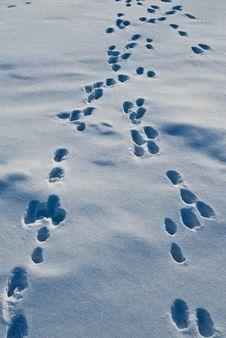 Free Snow Stock Image - 17775331