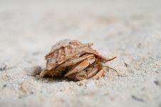 Free Walking Crab Stock Photography - 17775862
