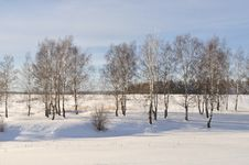 Free Birch Grove In Winter Time Royalty Free Stock Images - 17776929