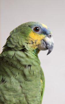 Free Orange Winged Amazon Stock Photo - 17777060