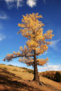 Free Tree Royalty Free Stock Photo - 17781505