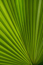 Free Pretty Palmate Frond Royalty Free Stock Photo - 17781635