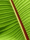 Free Diagonal Palm Frond Stock Photography - 17785092