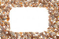 Free Seashells Royalty Free Stock Photos - 17788848