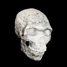 Free Skull Royalty Free Stock Photo - 17781115