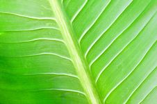 Free Green Lefs Of Tropical Flower Stock Image - 17782171
