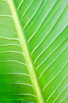 Free Green Lefs Of Tropical Flower Stock Photos - 17782273