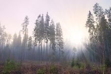 Free Sun In Misty Forest Stock Image - 17786701