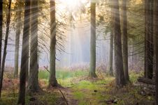 Free Forest Under Sun Stock Photo - 17786750