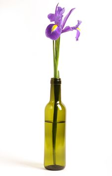 Free Iris In Bottle Royalty Free Stock Photography - 17786857