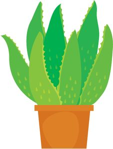 Free Aloe Vera Plant Royalty Free Stock Images - 17787019