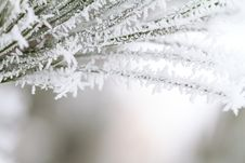 Frost On Branch Stock Photo