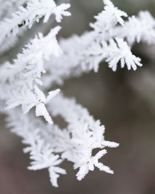 Free Frost On Tree Stock Image - 17787161