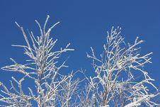 Free Winter Day Royalty Free Stock Photos - 17787828