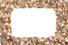 Free Seashells Royalty Free Stock Photos - 17788848