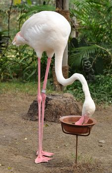 Free Flamingo Royalty Free Stock Images - 17789609