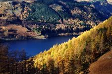 Free Sunlit Autumn Larches, Thirlmere Stock Photos - 17789703