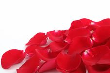 Free Rose Petals Stock Photo - 17789710