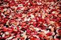 Free Autumn Carpet Stock Image - 17790801