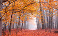 Free Beautiful Autumn Scene Royalty Free Stock Photography - 17792137