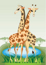 Free A Pair Of Young Giraffes Stock Photography - 17793902