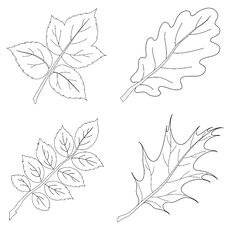 Free Leaves Of Plants, Contour, Set Royalty Free Stock Images - 17790429